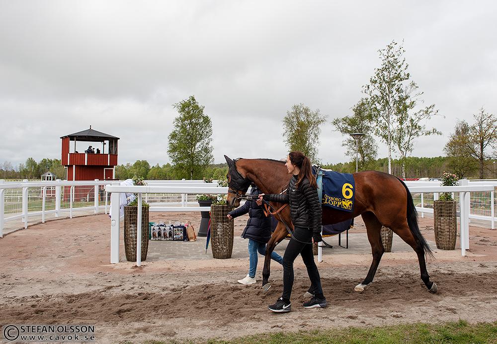 Ny ledvolt och vinnarcirkel på Göteborg Galopp
